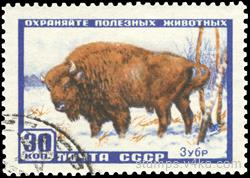 Bison. Secure useful animal patch a line
